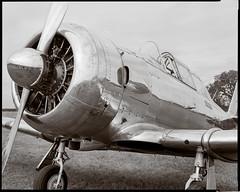 North American SNJ-5 (Wet Possum) Tags: 8x10 airfield airplane bwnegative deardorff hp5 pyro pyrocathd t6 epsonscan film ilford largeformat scan v700