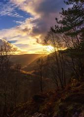 Light over Ben Venue (MilesGrayPhotography (AnimalsBeforeHumans)) Tags: 1635 fe1635mm sonyfe1635mmf4zaoss autumn a7ii britain benaan benvenue forest dusk europe evening fe f4 glow golden goldenhour haze iconic ilce7m2 landscape lens loch lochlomond lochlomondandthetrossachs trossachs mountains hill corbitt nighfall outdoors oss photography photo tranquil rocks rays scotland sky skyline scenic sunset sunshine sunlight sonya7ii sony sonyflickraward twilight trees uk unitedkingdom zeiss warm