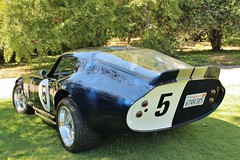 Cats in the Garden 2017 (USautos98) Tags: shelby