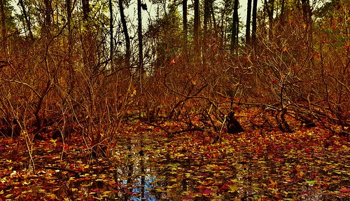Fort Smallwood Autumn Swamp Scene 2017