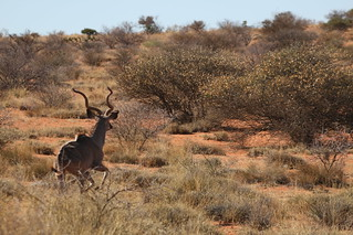 South Africa Hunting Safari - Northern Cape 86