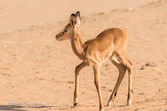 Samburu 2017-2 (Niren175) Tags: 2017 kenya samburu holiday