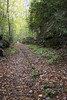 (DFChurch) Tags: cunard wv westvirginia fall autumn leaves nature earth travel