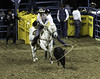 0246937429-95-Cowboy Calf Roping at the 2017 National Finals Rodeo-1 (Jim There's things half in shadow and in light) Tags: 2017 america american lasvegas nfr nationalfinals nevada rodeo southwest thomasandmack usa unitedstates action animal cowboy december sports western calfroping tiedownroping cow horse roping