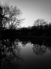 cold days (sephrocker) Tags: blackandwhite monochromatic mono landscape trees silhouette shadows winter