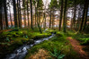 Into the woods.... (Einir Wyn Leigh) Tags: landscape wales rural woodland forest trees love walk light stream water lake conifers mountains foliage december christmas outside weather grass cymru