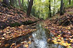 Little wood stream (Thijs de Bruin) Tags: autumn herfst water geel yellow