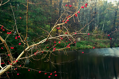 DSC_1988 (FMAG) Tags: 2017 żabieniec zalesie jesien