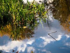 Spiegelung am Seeufer (mohnblume2013) Tags: see teich ufer spiegelung schilf himmel wolken