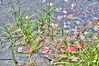 St. John's in the Wilderness Episcopal Church - Church Pond (Adventure George) Tags: acdseeultimate adirondack adirondackforestpreserve adirondackmountains adirondackpark adk autumn backroad clouds color colorimaging ecosystem fall fallcolors forest greatnorthernforest hdr highdynamicrangeimage landscapes majestic mountain mountains naturalworld naturereserve newyork newyorkstate nikond700 nystatepark october outdoor park photogeorge photoshoot photographers photomatixpro skylandwater upstatenewyork us usa westernnewyork woodland woods paulsmiths unitedstatesofamerica stjohnsinthewildernessepiscopalchurch franklincounty