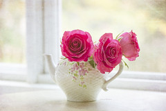 Window Dressings (jm atkinson) Tags: teapot roses texturebykerstinfrank naturallight joanmatkinson mytrustyd700 105mm highkey octobersun