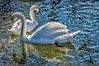 Counterpoint (Pejasar) Tags: lake two swans white sparkle grace hollister arkansas hardworku water reflection light