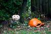 Man Down (Jules (Instagram = @photo_vamp)) Tags: stuffinmybackyard backyard saginawmichigan rain rainyday november pumpkins jackolantern