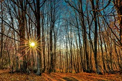 The Blair Witch Project (Gio_ guarda_le_stelle) Tags: woods trees sunset dark autumn blaair witch moovie landscape sila italy calabria forest