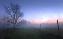 Fraiche Campagne (f.ray35) Tags: campagne chemin brume bretagne brittany illeetvillaine france sunlight