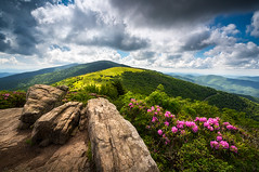 Roan Mountain Radiance Appalachian Trail NC TN Mountains (Dave Allen Photography) Tags: landscape northcarolina nc appalachian trail tennessee tn appalachians mountains outdoors photography southernappalachians adventure nature flowers mountain hiking rhododendron spring summer blueridge nikon d810 zeiss 15mm milvus