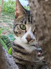 Panda (rjmiller1807) Tags: panda cat kitty kitten katze kat 2017 iphone iphonography iphonese cute sweet tree trunk