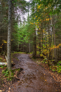 Wet Trail m3s
