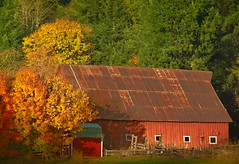 Autumn Barn 4744 B (jim.choate59) Tags: barn tinroof rust autumn autumncolors fallseason fallcolors rural tree clarkcountywashington landscape jchoate washington ruraldecay d610 on1pics