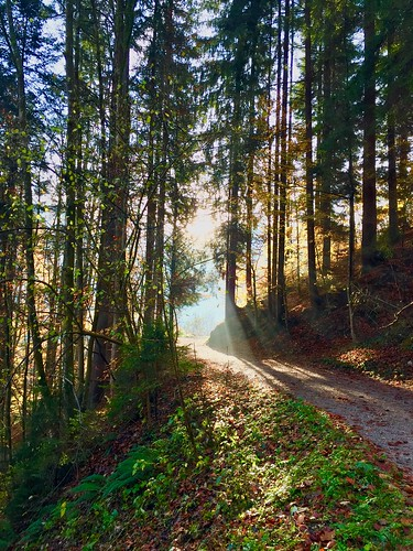 Morning sun rays in the forest