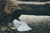 Shattered (Nwywre) Tags: fineart darkart concept conceptual forest wood woods girl blonde whitedress book buch wald fog nebel