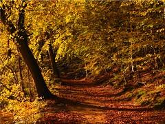 Autumn forest (Ostseetroll) Tags: deu deutschland geo:lat=5418657796 geo:lon=1064735975 geotagged kirchnüchel schleswigholstein ukleisee herbst herbstfarben autumn autumncolours