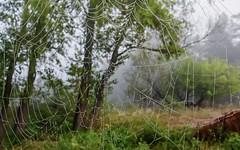 Necklace (kud4ipad) Tags: 2016 prokhorovka tree morning fog mist web cobweb