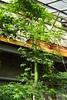 Botanical Garden Wrocław (nesihonsu) Tags: ogródbotaniczny botanicalgarden wrocław wroclaw lowersilesia dolnyśląsk dolnośląskie plant floweringplant angiosperm okrytonasienne poland polska
