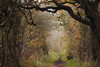 Autumn Daze (Cal Killikelly) Tags: wirral way cal magical place nature autumnal pathway doorway brown peach tunnel frame storybook fairytale