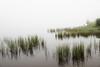 Le pêcheur d'un matin brumeux à l'étang de Lers (Yvan LEMEUR) Tags: etang etangdelers ariège pyrénées pêcheur pêche brume matinbrumeux brouillard leport auluslesbains vicdessos massat pyrénéesariégeoises france landscape paysage extérieur végétationaquatique roseaux