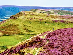 Cleveland Way, North York Moors (pajacksonartist) Tags: cleveland way north york moors national park yorkshire heather moorland landscape england beautiful stunning path footpath trail long distance walk