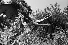 Flieger.... (skinner08) Tags: canon ftb analog kleinbild agfa apx100 adonal 150 10min canoscan 8800f selfdeveloped schwarz weis black white dinopark wildlife