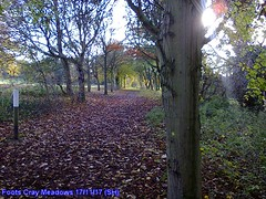 Foots Cray Meadows (Steve Hadlow) Tags: trees foots cray sidcup leaves