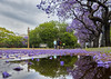 Mantle of flowers (maxem fotos) Tags: jacaranda buenosaires reflejos reflections violet colorful