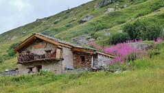 Haute Maurienne, Randonnée à la Grande Aiguille Rousse, 3482 metres, Vallon de Trieves (thierry llansades) Tags: maurienne arc modane savoie rando randonnée randonneur randonneuse hautemarienne lanslebourg lanslevillard bonneval mont aiguille rousse aiguillerousse montagne mountain italie iseran