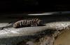 oruga muerta (guilletho) Tags: caterpillar oruga canon escenery nature gusano mexico