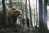 The Big Bear (Andreanne Lupien) Tags: outside photography image colorful portrait people surreal surrealist imagine imagination create creative creativity magic bear animal forest wild savage light sun couple love road walk together girl boy men surprise