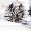 Relaxing cat (Marjan van de Pol) Tags: 5dmarkiv canon canon5d dordrecht katten nederland grace favorite fave faved