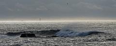 Kéréon (Le flap) Tags: topologie|côtier topologie|hydrologie|océan géographie|maritime|atlantique topologie|rocher topologie|côtier|brisant eau|vagues maritime|navigation|phare|kéréon maritime|navigation|phare|lajument porspoder finistère france