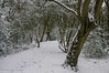 Snowy Path (M C Smith) Tags: trees pentax k7 white bushes holly footsteps eppingforest green