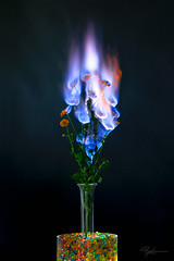 """Burning Flower 5 • <a style=""""font-size:0.8em;"""" href=""""http://www.flickr.com/photos/56830416@N05/38112104404/"""" target=""""_blank"""">View on Flickr</a>"""