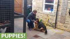 German Shepherd cries out in happiness after months apart from owner (Darth Viral) Tags: dogvideos dogsandpuppies funnydogs funnypets funnyvideos petvideos puppyvideos viralvideos