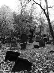 Jüdischer Friedhof (four-hearts) Tags: judenfriedhof jüdischerfriedhof friedhof gräber grabsteine ruhestätte herbst schwarzweis worms wo rheinhessen rheinlandpfalz bäume pflanzen heiligersand