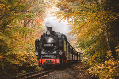 Steam 'n' color (Steffen Walther) Tags: 2017 fotografjena steffenwalther göhren herbst ostsee rügen urlaub germany train railway steamlocomotion autumn fall colors travel europe balticsea rasenderroland canon5dmarkiii canon135l catchy wood forest leaf steam outside outdoors transportation indiansummer
