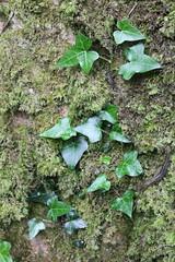 IMG_3171 (avsfan1321) Tags: connemaranationalpark connemara nationalpark ireland countygalway green lush landscape plants moss