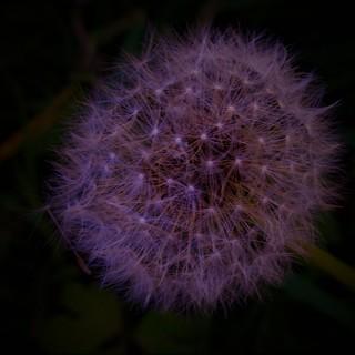 Stunning macro puff ball