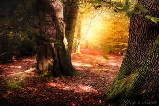 Autumn_Forest_Scene_FA1