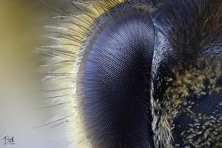 Eye Bee