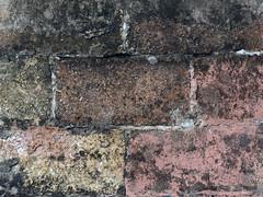 El mur (The Wall)