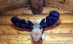 Cabin Decor . . (JLS Photography - Alaska) Tags: cabin cabinlife decorating decorations wallhangers jlsphotographyalaska moose stuffies stuffedanimals art handiwork homemade sewing animal